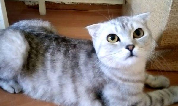 Во время течки кошка может оставлять метки на одежде, обуви, стенах и напольных покрытиях