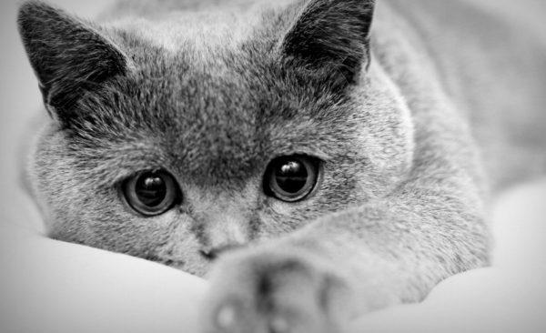 Если хотите завести котят, во время течки любимицу купать запрещено