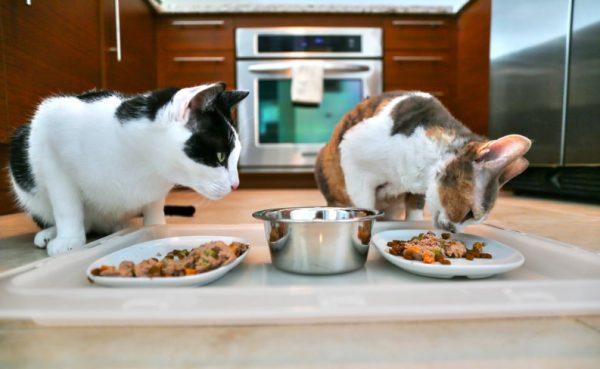 Супы, бульоны, молоко – это не еда для хищников, которые привыкли грызть и жевать