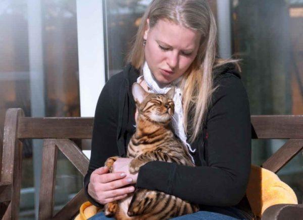 Приручить кота или кошку можно успешно, если завоевать их доверие