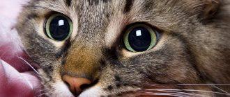 Почему у кошки выпадает шерсть клоками и появились болячки на коже болячки на спине и голове