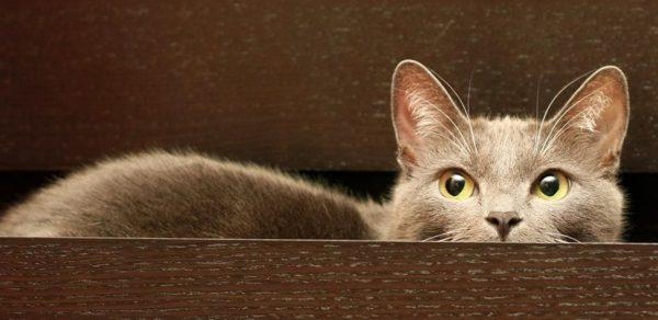 Если кот совсем не ходит в туалет по-маленькому, нужно искать медицинские причины