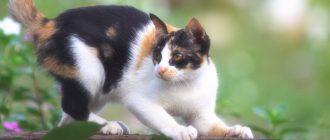 Почему у кошки болячки и коросты на шее и голове, отчего она постоянно чешется? Советы по лечению зуда