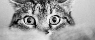 Как уживаются две кошки в одной квартире