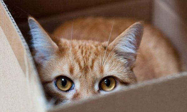 Заставить кошку метить может страх или ревность