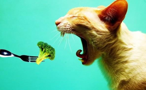 Гипоаллергенный корм для кошек используется для питомцев, страдающих от аллергических реакций