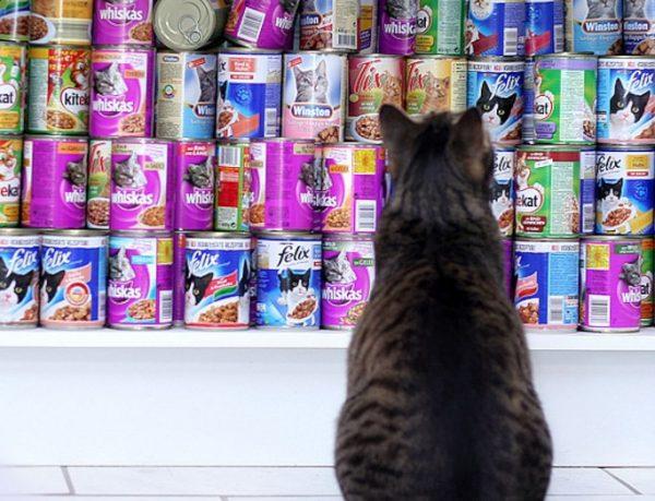 Для кошек, которые страдают от аллергии, правильное питание лучше выбирать совместно с ветеринарным врачом