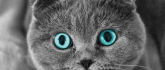 Как колоть антибиотики коту