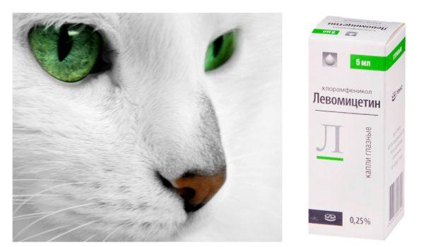 Левомицитин для кошек
