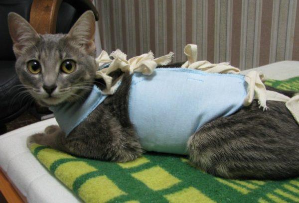 Период заживления шва чрезвычайно важен для дальнейшего здоровья кошки