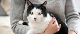 Диронет спот он для кошек инструкция по применению и показания к использованию, цена, отзывы владельцев