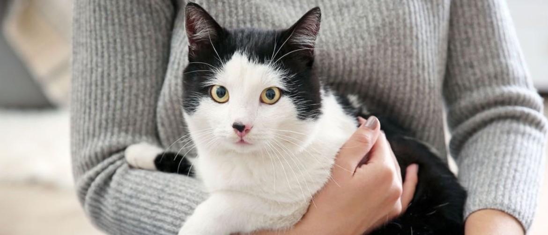 Ушные капли для кошек от клеща: как выбрать и как использовать