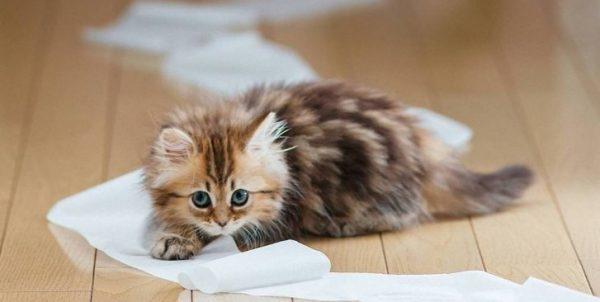 При обнаружении проблемного стула у котенка анализируется его режим питания