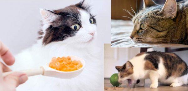 Часто возникают ситуации, когда кошки отказываются от еды и питья
