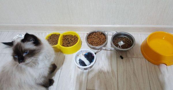 Для быстрого восстановления сил кошки с плохим аппетитомнужно соблюдать специальную диету