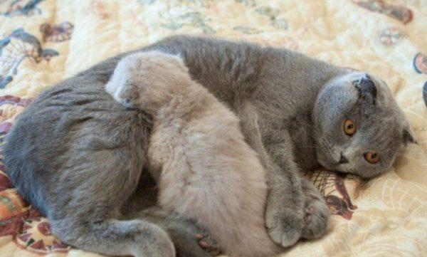 Кошка на короткое время покидает гнездо для приема пищи