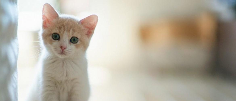 Почему у кота появились болячки на шее?