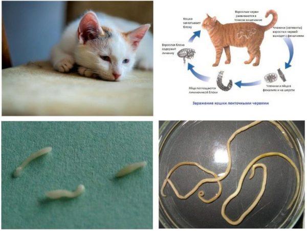 Продукты жизнедеятельности гельминтов, а также токсины, выделяемые ими, провоцируют кожные высыпания и аллергическую реакцию