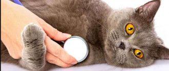 Почему у кошки гноится глаз что делать и чем лечить в домашних условиях