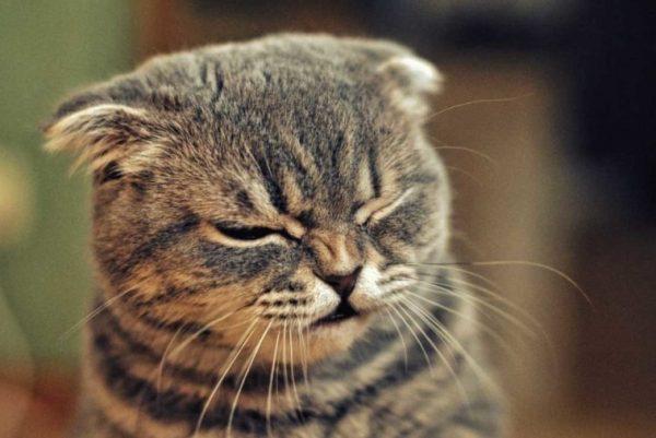 Постоянный или сильный кашель у питомца – повод посетить ветеринара