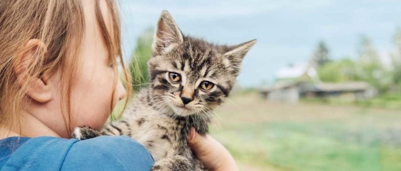 Калицивирусная инфекция кошек: лечение, диагностика, симптомы. Калицивироз
