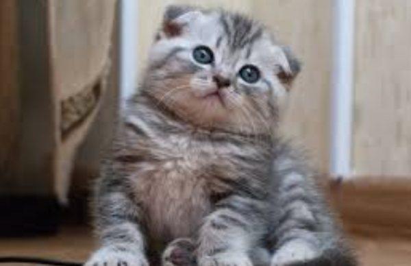 При кормлении котят заводским кормом важно следить за пищеварением любимца: