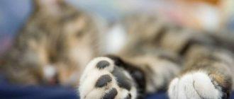 Понимают ли кошки человеческую речь простые способы общения с питомцем