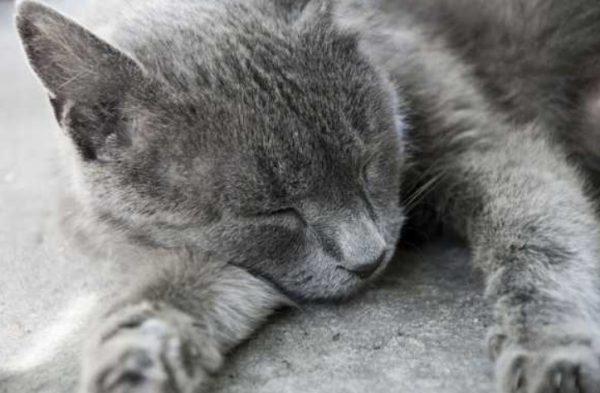 Врачи нередко проводят эвтаназию котов на дому