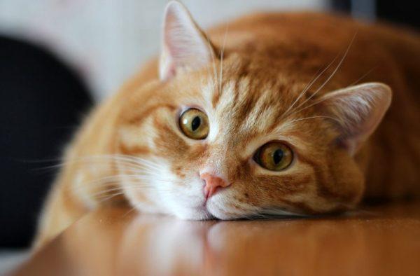 Как отучить кошку гадить в квартире самому