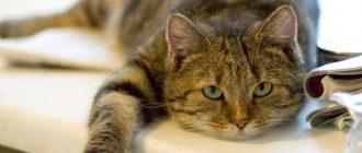 Кот разлизал рану после кастрации что делать как ухаживать