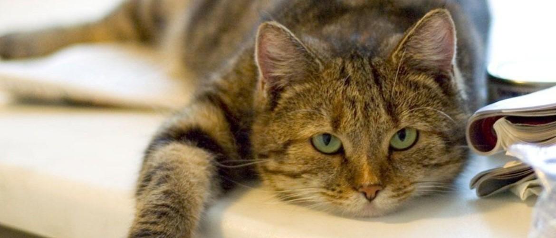 Кошка после стерилизации не ест и не пьет несколько дней, тошнит, что делать