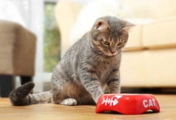 Современные производители сухих кормов выпускают специальные корма для стерилизованных кошек
