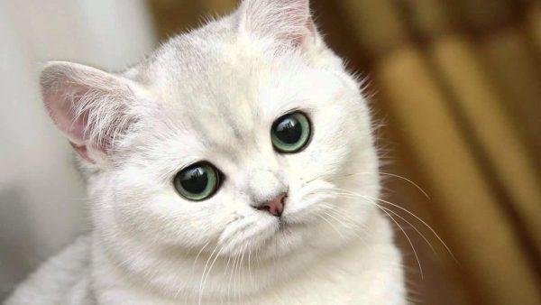Как назвать белого котенка-мальчика