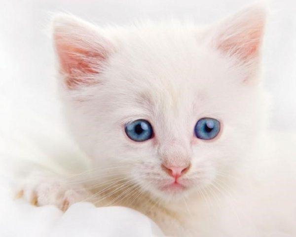 Как назвать белого котенка-девочку