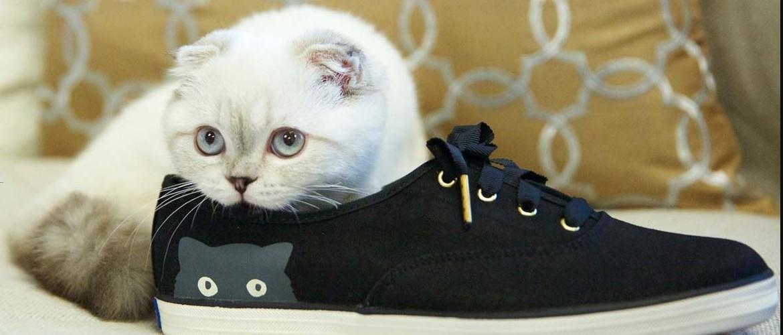 Как убрать запах кошачьей мочи с обуви