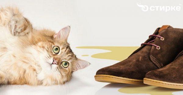 Некоторые владельцы кошек сталкиваются с неприятной проблемой, т. к. питомец справляет малую нужду на/в обувь хозяина