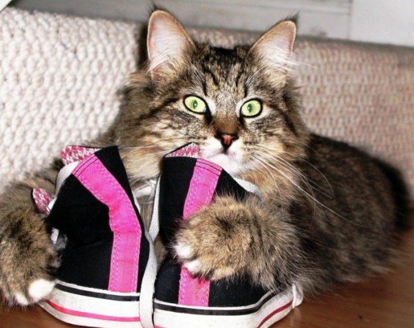 Пахнущие мочой сапоги, мокасины привлекут других кошек, которые будут метить подъезд