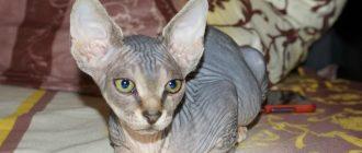 Можно ли кормить кота сухим и влажным кормом без вреда?