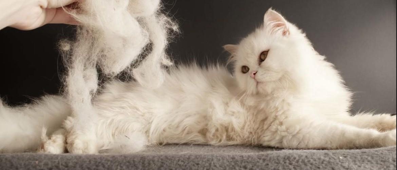 Как подстричь свалявшуюся шерсть у кошки