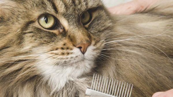 Для устранения шерстяных комков у пушистых пород котов используется безопасный и простой в применении инструмент, который называется колтунорез