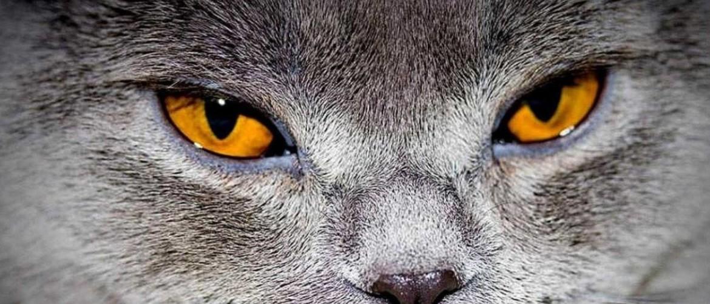 Что делать если кот хрипит и слезятся глаза thumbnail