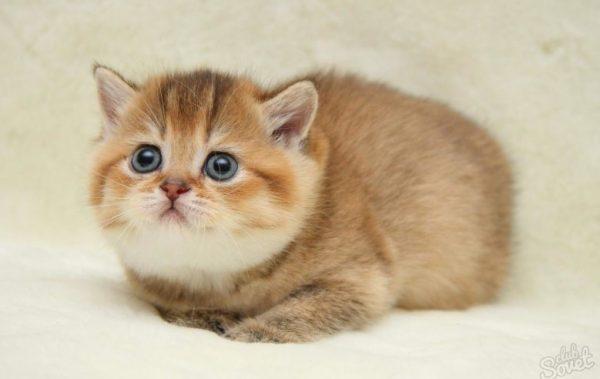 Определить пол маленького котенка – задача не из простых