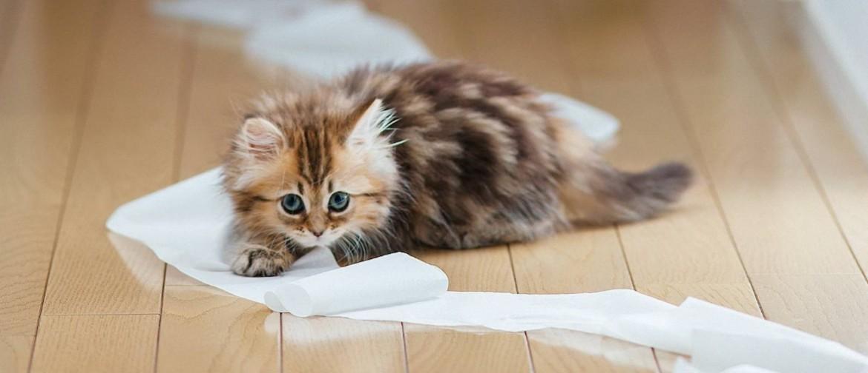 Почему кошка гадит где попало: причины, психология поведения кошек, методы и способы отучить питомца гадить в неположенном месте