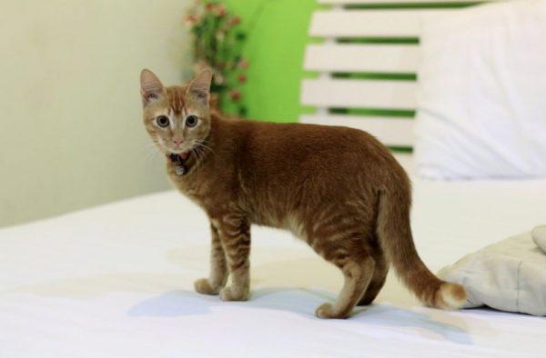 Причины, почему взрослый кот и котенок гадит, где попало