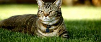 Почему кошка набрасывается на ноги. Почему кот бросается на ноги и кусается.