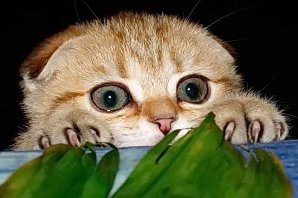 Коты на дух не переносят алкоголь (виски, коньяк, водку).