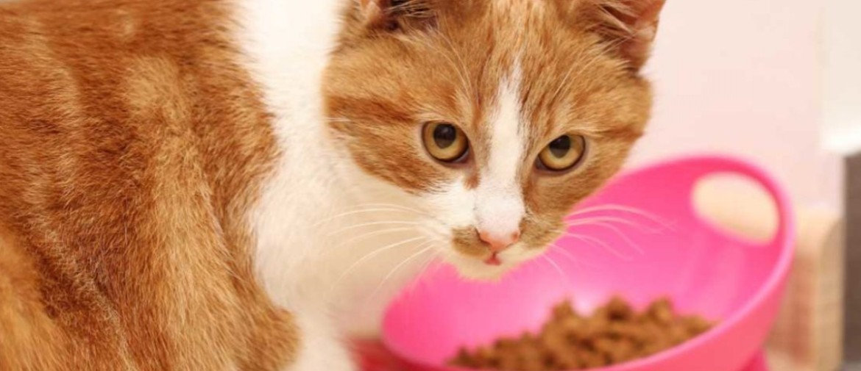 Как правильно кормить кастрированного кота - полезные советы