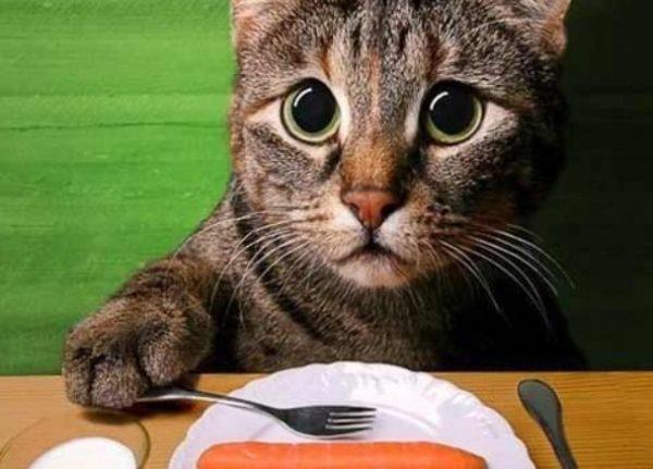 Здоровье питомца в первую очередь зависит от кормления.