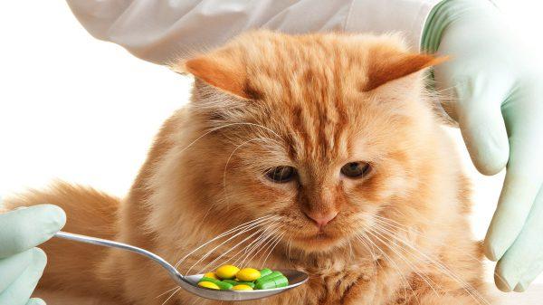Лечение кошачьей простуды при помощи лекарственных препаратов
