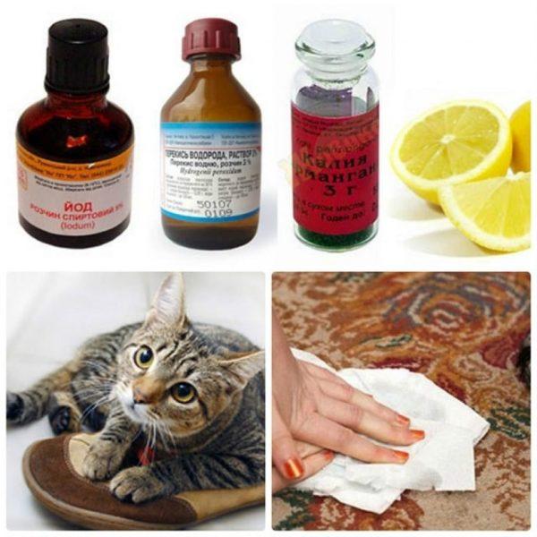 Кот пометил: как убрать запах, лучшие народные и химические средства, как отмыть одежду и обувь